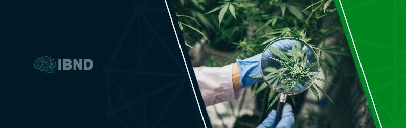 Uso medicinal da cannabis: entenda